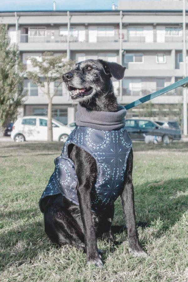 abrigo de invierno para perros buenos aires