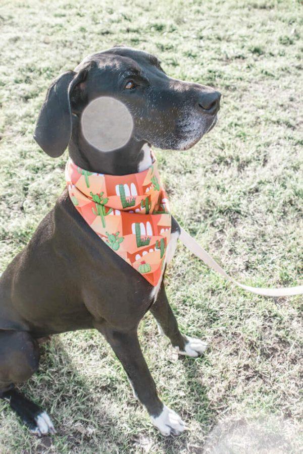 bandana dog perro