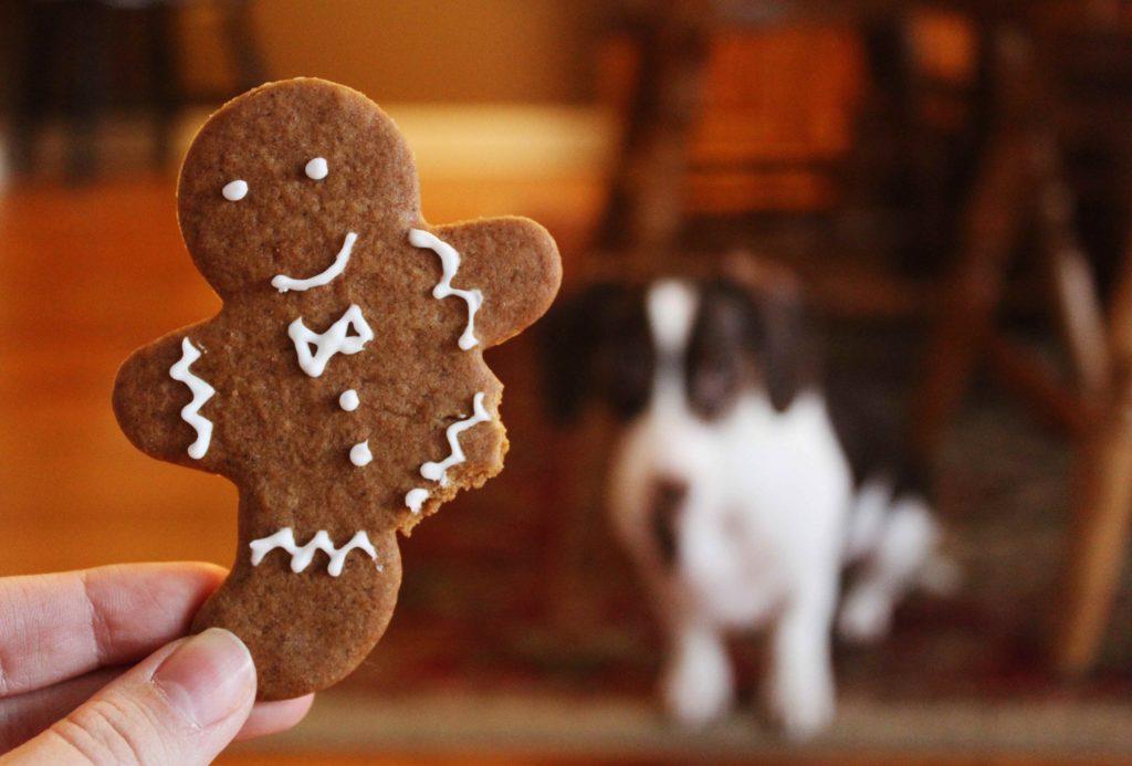 galletitas para perros